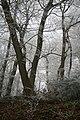 Within Hinkley Wood - geograph.org.uk - 1112622.jpg