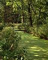 Woliński Park Narodowy ścieżka przyrodnicza Paprocie 2016-08-27 p2.jpg