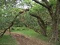 Woodland arch - geograph.org.uk - 518466.jpg