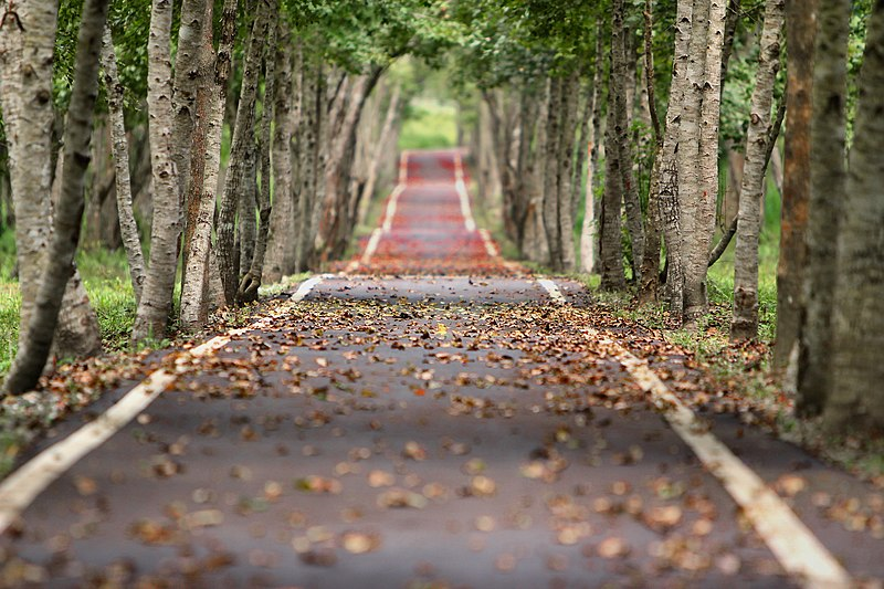 File:Woodland path.jpg