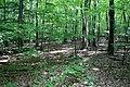 Woods of Rochambeau campsite in West Hartford, August 27, 2008.jpg