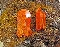 Wulfenite (Red Cloud Mine, La Paz County, Arizona, USA) 2 (16738499943).jpg