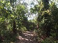 Wyrrabalong National Park - Lilly Pilly Loop Trail - panoramio.jpg