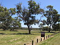 Yellagonga RP from opp Wangara.jpg