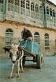 Young wagoner in Basra, Iraq.jpg