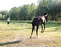 Young woman with her jumping horse.jpg