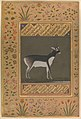"""Black Buck"", Folio from the Shah Jahan Album MET DP246551.jpg"