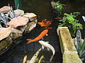 (1)Lisgar Gardens 039-fishponds.jpg