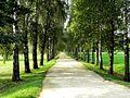 Аллея (une allée) - panoramio.jpg