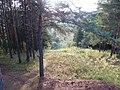 Вид с Андроновких гор, середина сентября 2011 - panoramio.jpg