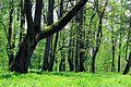 Высокаўскі парк - panoramio (1).jpg