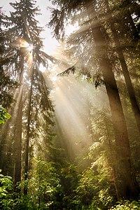 В лісі під горою Кукул.jpg