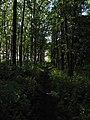 Дендрологічний парк, Довгинцівський район 03.JPG