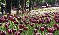 Дендропарк у травні, м. Кропивницький.jpg