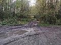 Дорога вдоль Гайвы 30.jpg