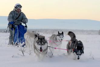 Разведчики Северного флота на учениях с ездовыми собаками