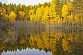 Золотая осень на озере.jpg