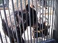 """Зоопарк """"Роев ручей"""" (029).JPG"""