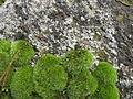 Камень дайнаўскі. Дайнава (08).jpg