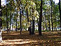 "Ковёр из жёлтых листьев (парк ""Швейцария"").jpg"