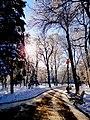 Липки зимой.jpg