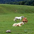 Лошади - panoramio (2).jpg