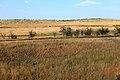 Обрывистый берег речки Янгиз - panoramio.jpg