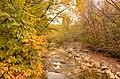 Осень в одном из Севастопольских лесов.JPG