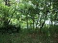 Парк шума Гази Баба во мај (7).JPG