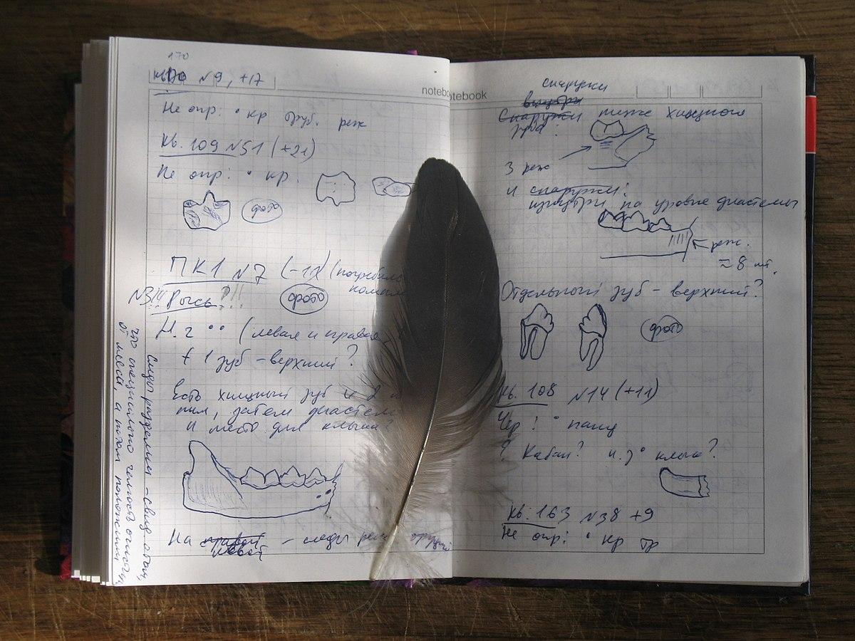 архив погоды для дневника наблюдений