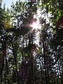 Солнечный лесопарк.jpg