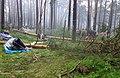 Упавшие деревья на Ильменском фестивале ilmeny.jpg