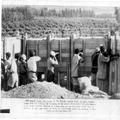 המאורעות בארץ ישראל 1938 - ליד חיפה עמדת ירי של לוחמים יהודים-PHL-1088138.png
