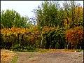 دیدنیهای پاییز مراغه - panoramio (12).jpg