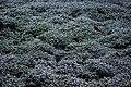 عکس از گلها و گیاهان باغ بوتانیکال تفلیس - گرجستان 30.jpg