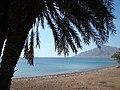 منظر طبيعي يجمع النخل مع البحر مع الجبل من نويبع.JPG