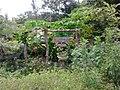 บ้านสวนศรีสงคราม ตำบล สร้างนางขาว - panoramio (3).jpg