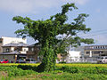 三菱農業機械 (14999438219).jpg