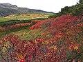北海沢の彩り - panoramio.jpg
