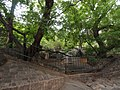 卧龙槐 - Lying Dragon Pagoda Tree - 2012.06 - panoramio.jpg