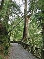 台灣桃園縣復興鄉拉拉山森林遊樂區 - panoramio.jpg