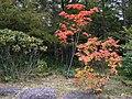 御泉水自然園 - panoramio (7).jpg