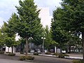 東京情報大学中央通りから本館方面を望む2 - panoramio.jpg