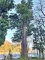 諏訪社 Suwa shrine 7.jpg