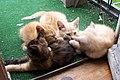 004 kittens.jpg