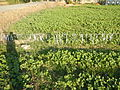 0138jfMaasim River Dam Fields Candaba Pampanga San Ildefonso Bulacanfvf 03.JPG