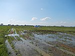 03306jfBirds Sanctuary Ducks Wetland Marshes Rice Fields Candaba Pampangafvf 13.JPG