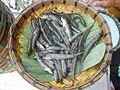 04639jfMantis shrimp Oxyurichthys microlepis fishes Bulacanfvf 05.jpg