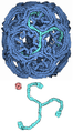 088-Clathrin-1xi4-composite.png