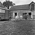 1958 visite d'une délégation INRA au Haras du Pin Cliché Jean Joseph Weber-70.jpg
